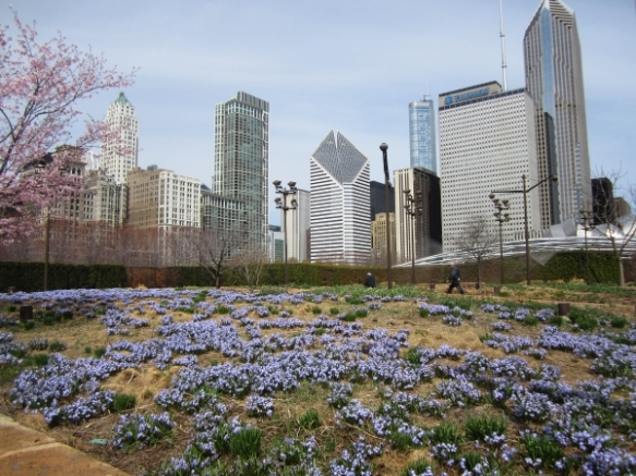 Chicago's Lurie Garden in early spring (Photo copyright 2015 by J.D. Kubal; all rights reserved)
